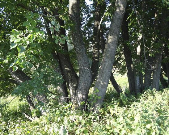 Удаление дерева от корня