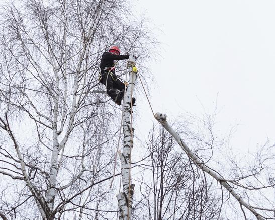 Удаление дерева с завешиванием частей